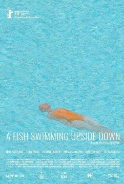 Рыба, плавающая брюхом вверх (2020)